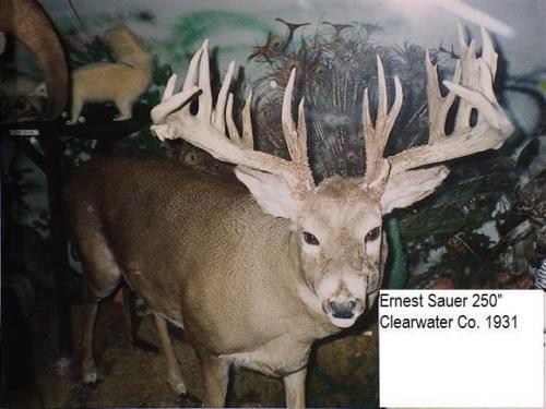 Ernest Sauer